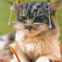 Tom d`Cat's photos